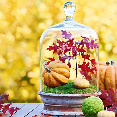 pumpkin_terrarium